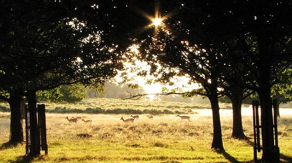 Richmond Park - Londra